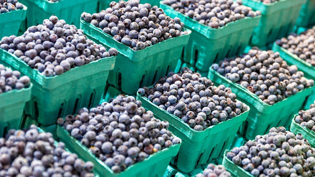 blueberries in green containers