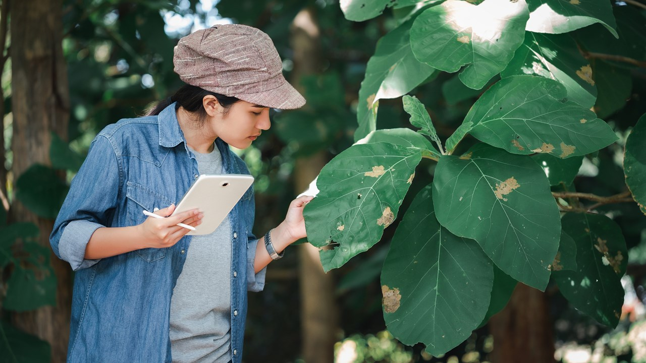 researching tree leaves