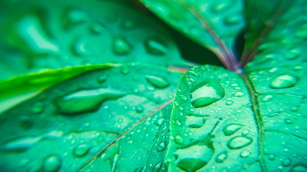 Rain Drops On Green Leaf Nature