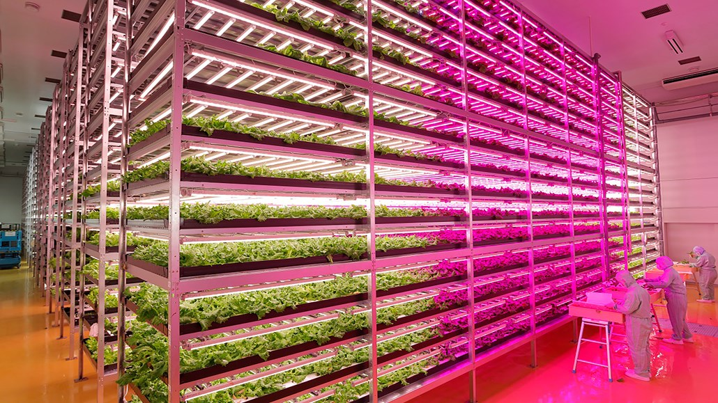 Horticulture lighting for crops